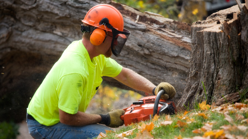 Tree Services in Collingwood, Ontario