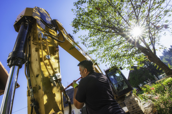 Advice from Your Arborist: Make Tree Preservation a Priority Before Construction